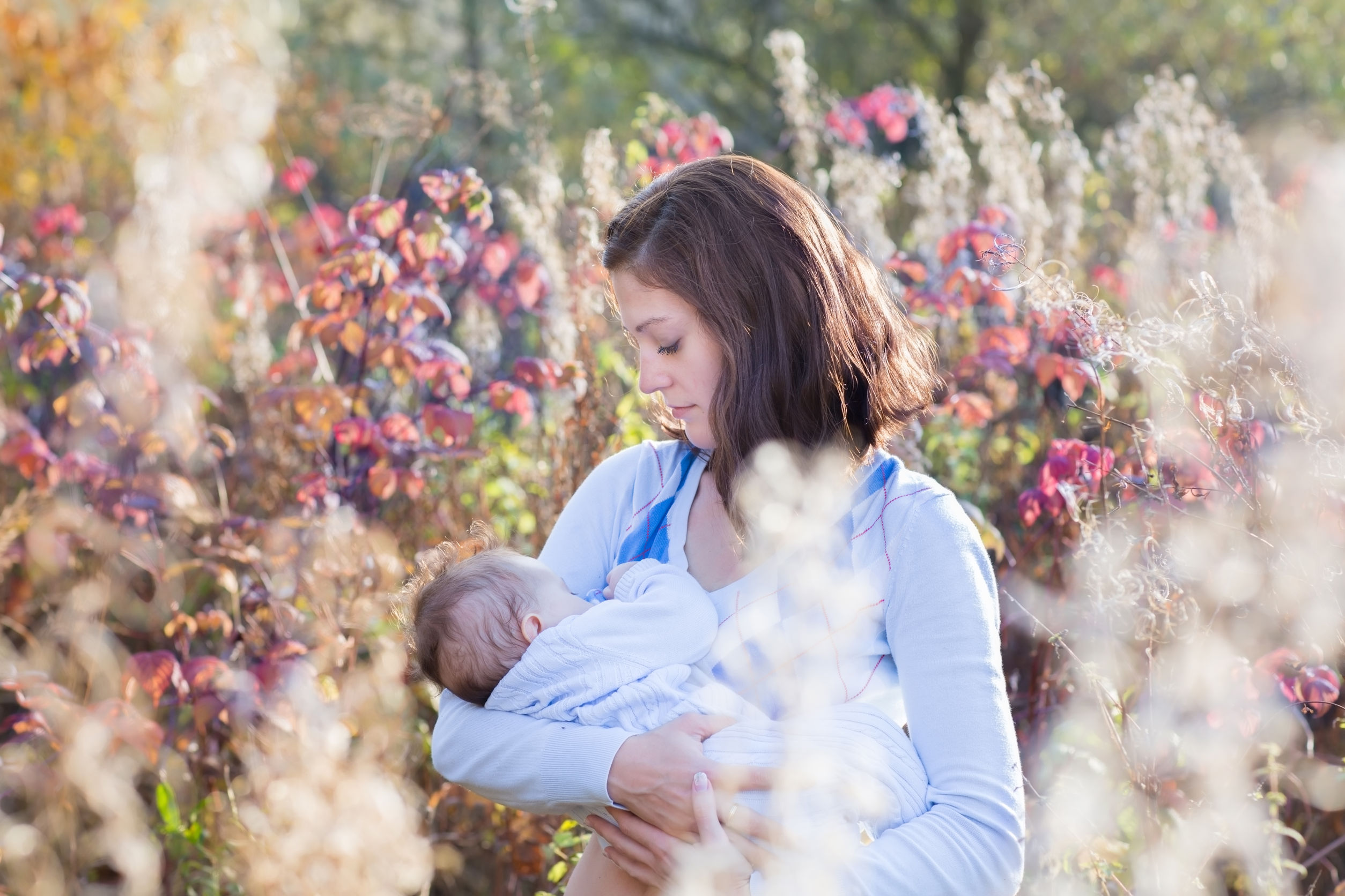 29528772 - young beautiful mother breastfeeding her baby in a meadow on a sunny day