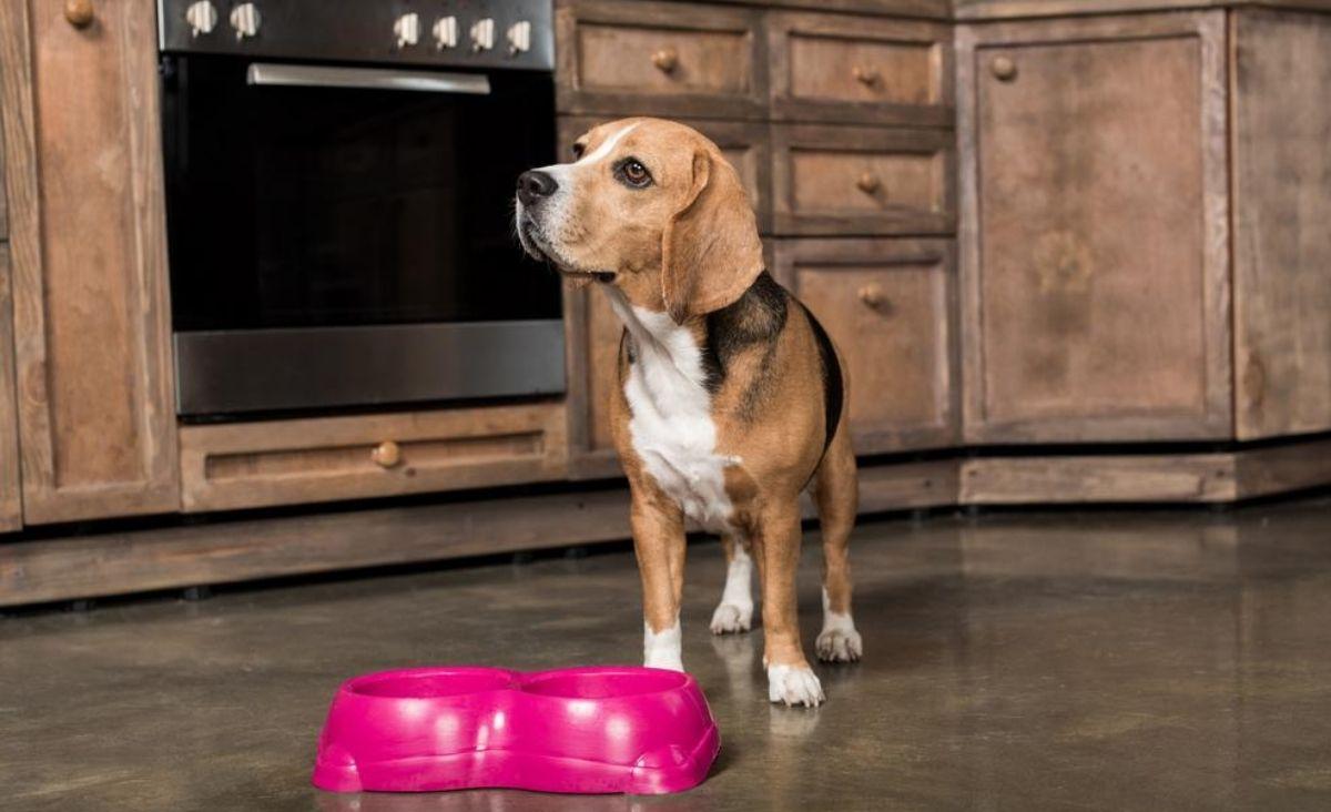 Prawidłowe karmienie psa - wiesz, jak powinno wyglądać?
