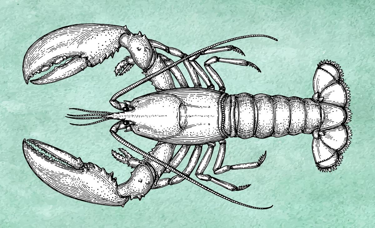 Stres z perspektywy homara. Czy mindfulness jest lekarstwem na wszystko?