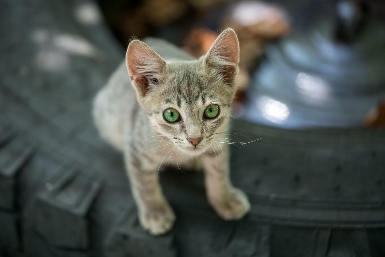 Bezdomne koty: jak im pomóc?
