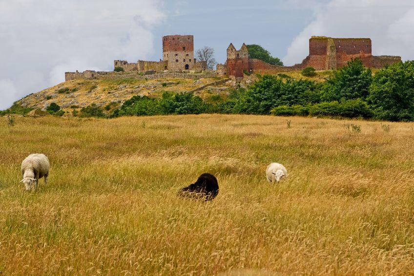 123RF.com / Hammershus, ruiny zamku na Bornholmie, Dania