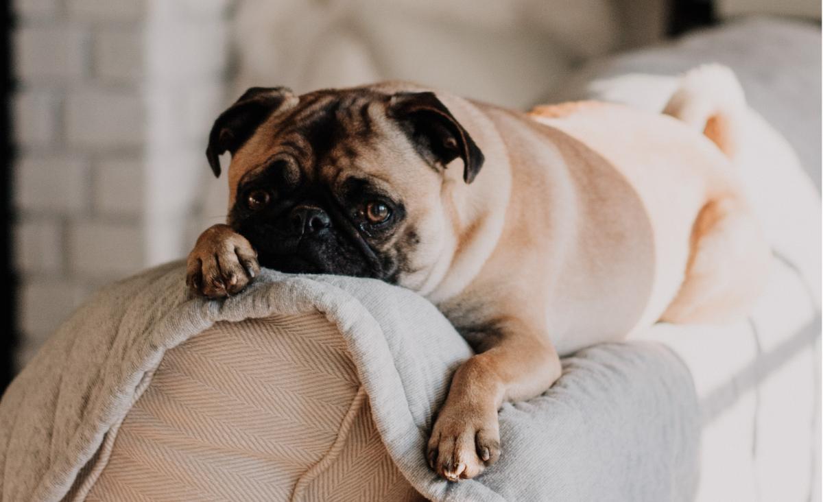 Jak wyliczyć wiek psa? Ile lat ma twój pies w przeliczeniu na lata ludzkie?