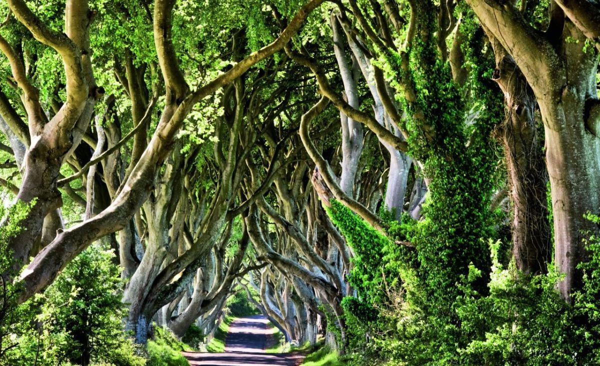 Peter Wohlleben przekonuje, że świat drzew nie różni się bardzo od naszego. (Fot. Getty Images)