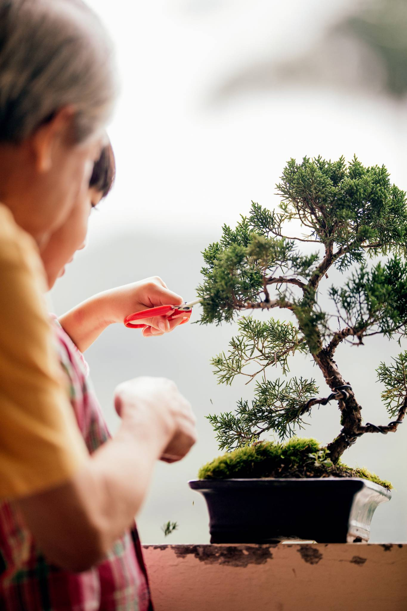 Bonsai – sztuka czasu