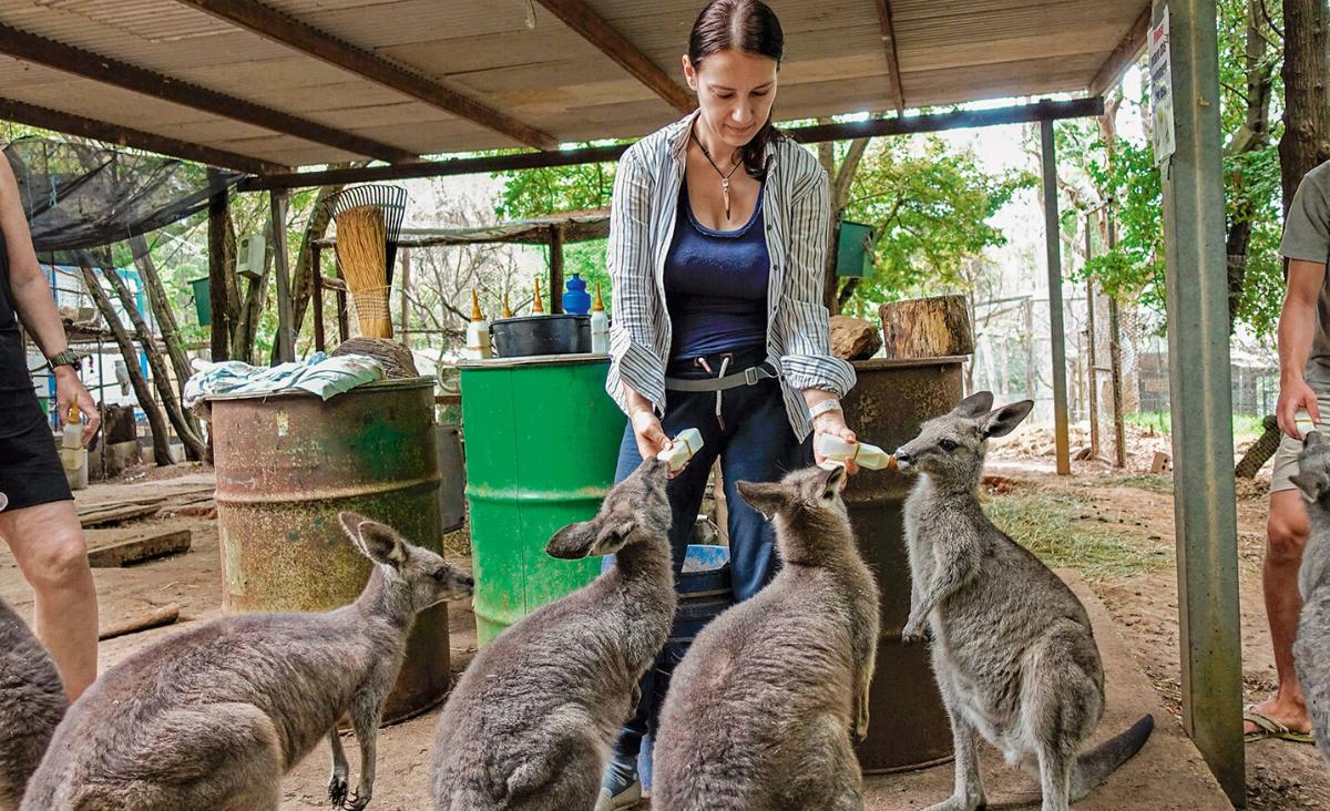 Małgorzata Zdziechowska na wolontariacie wśród zwierząt