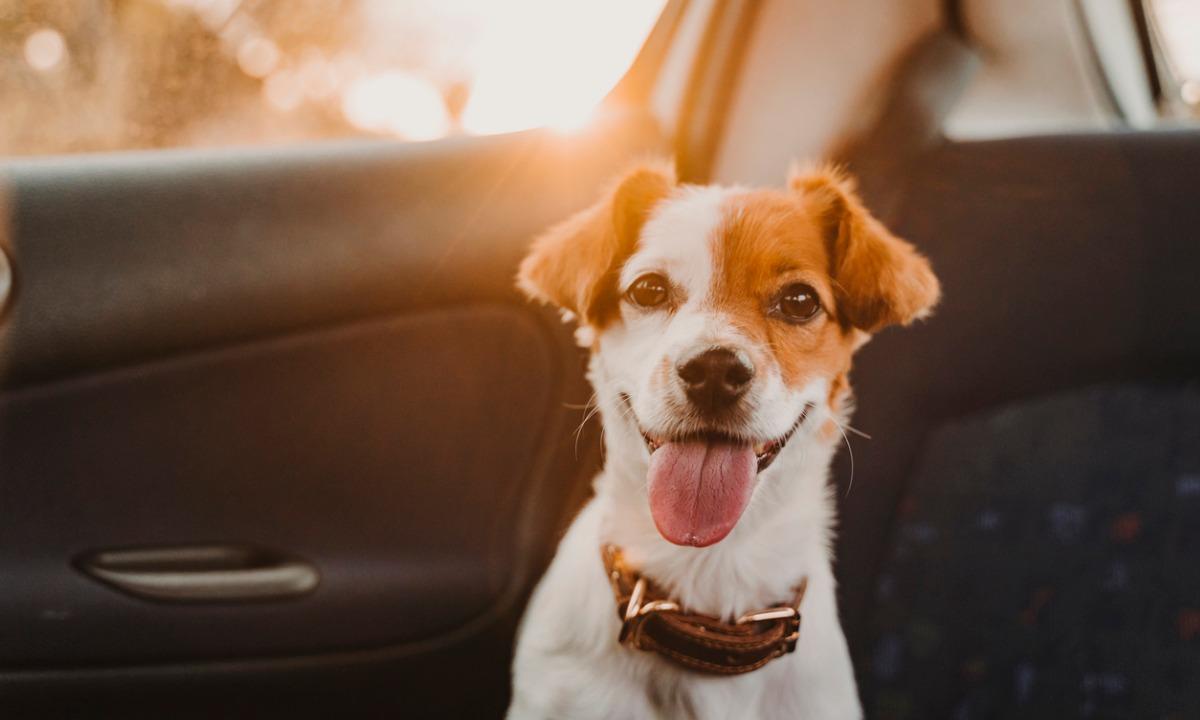 Podróże ze zwierzętami - jak się do nich przygotować?