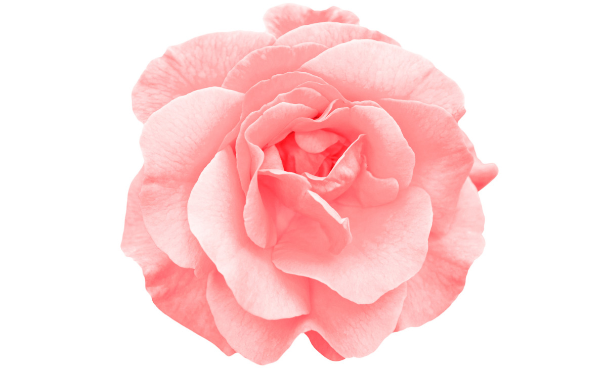 Najpięniejsze zapachy Różane rozdanie