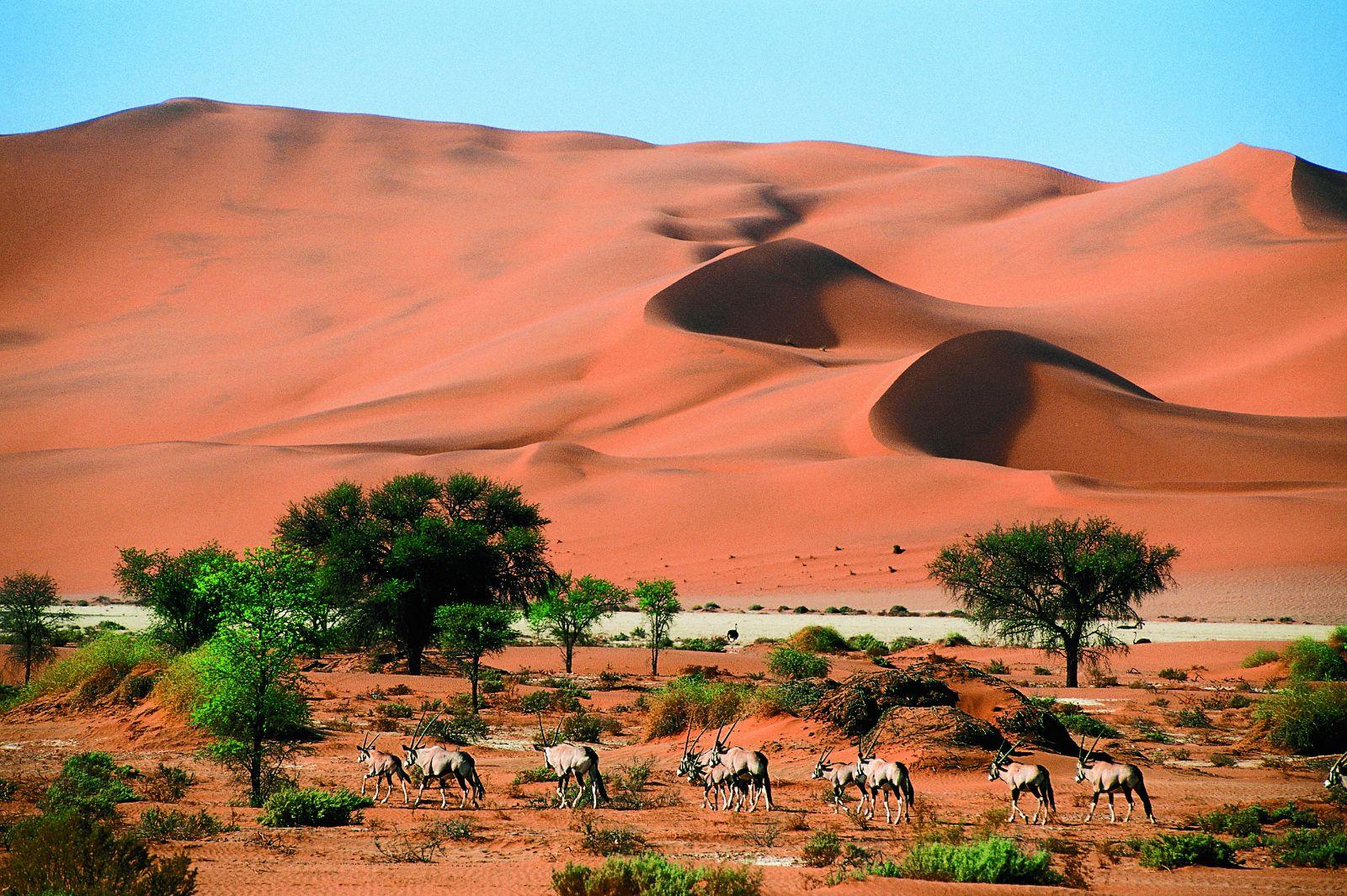Luksusowe wycieczki dla wymagających i wyprawy do Afryki z biurem podróży Carter