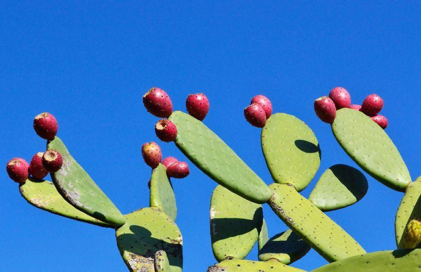 Kaktus czyści wodę