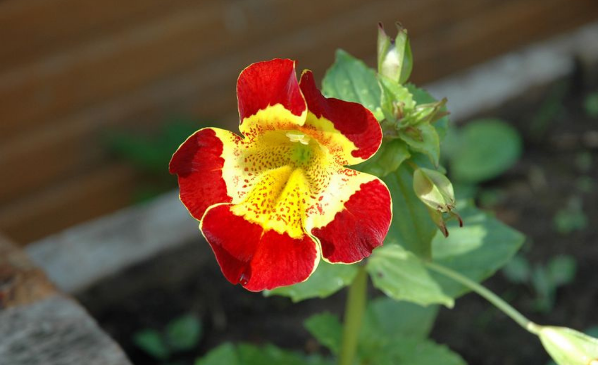Kwiatoterapia - lecznicze właściwości kwiatów