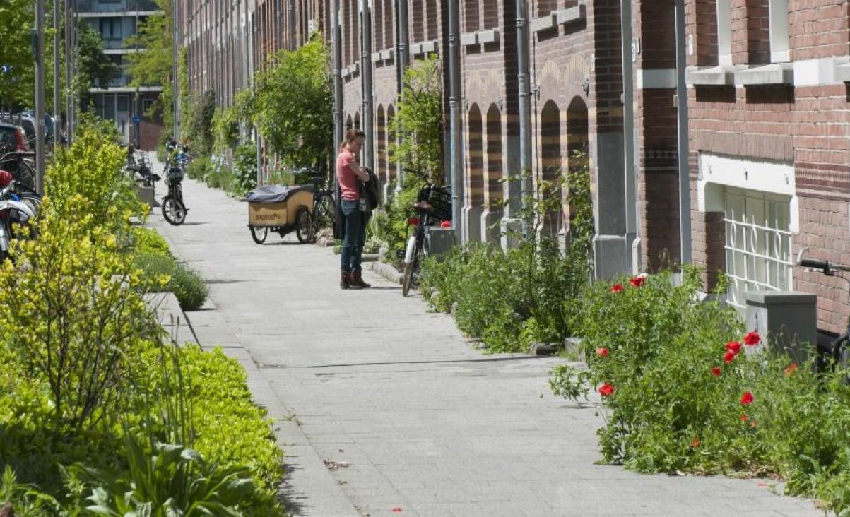 Rotterdam walczy z betonowymi chodnikami i sadzi kwiaty