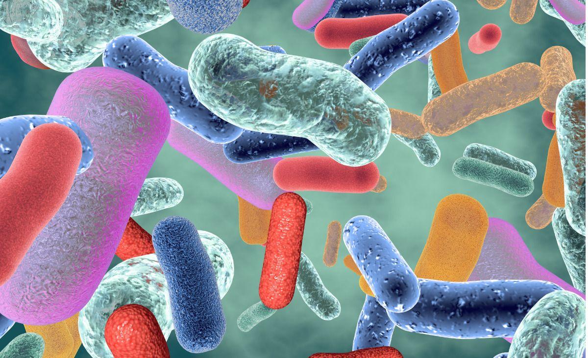 Probiotyki - bakterie jak leki