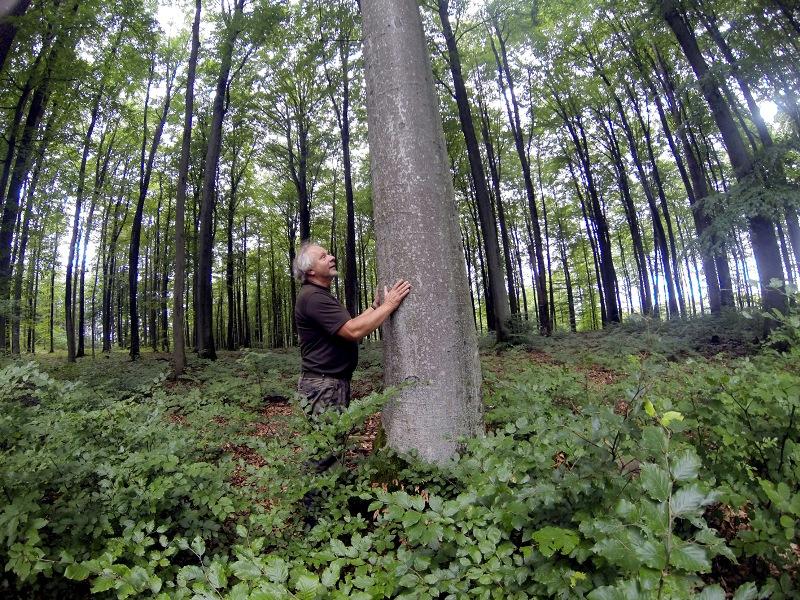 Odkrywamy zawody: leśniczy. Na czym polega jego praca?