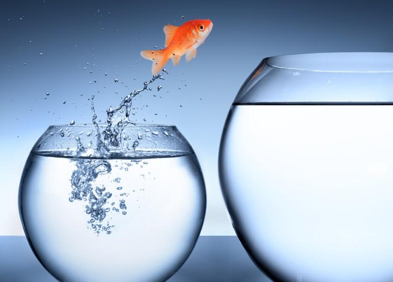W odwadze jest mnóstwo energii, to stan działania i uwolnienia, wyzwala zaradność i optymizm. (Fot. iStock)