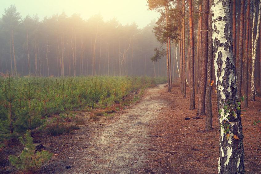 Las: najlepszy odpoczynek od miasta