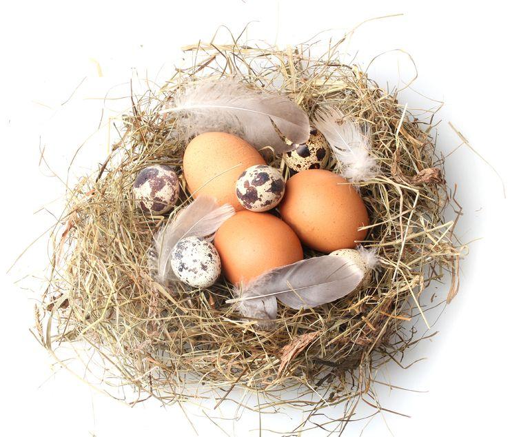 jajka.ekologiczne