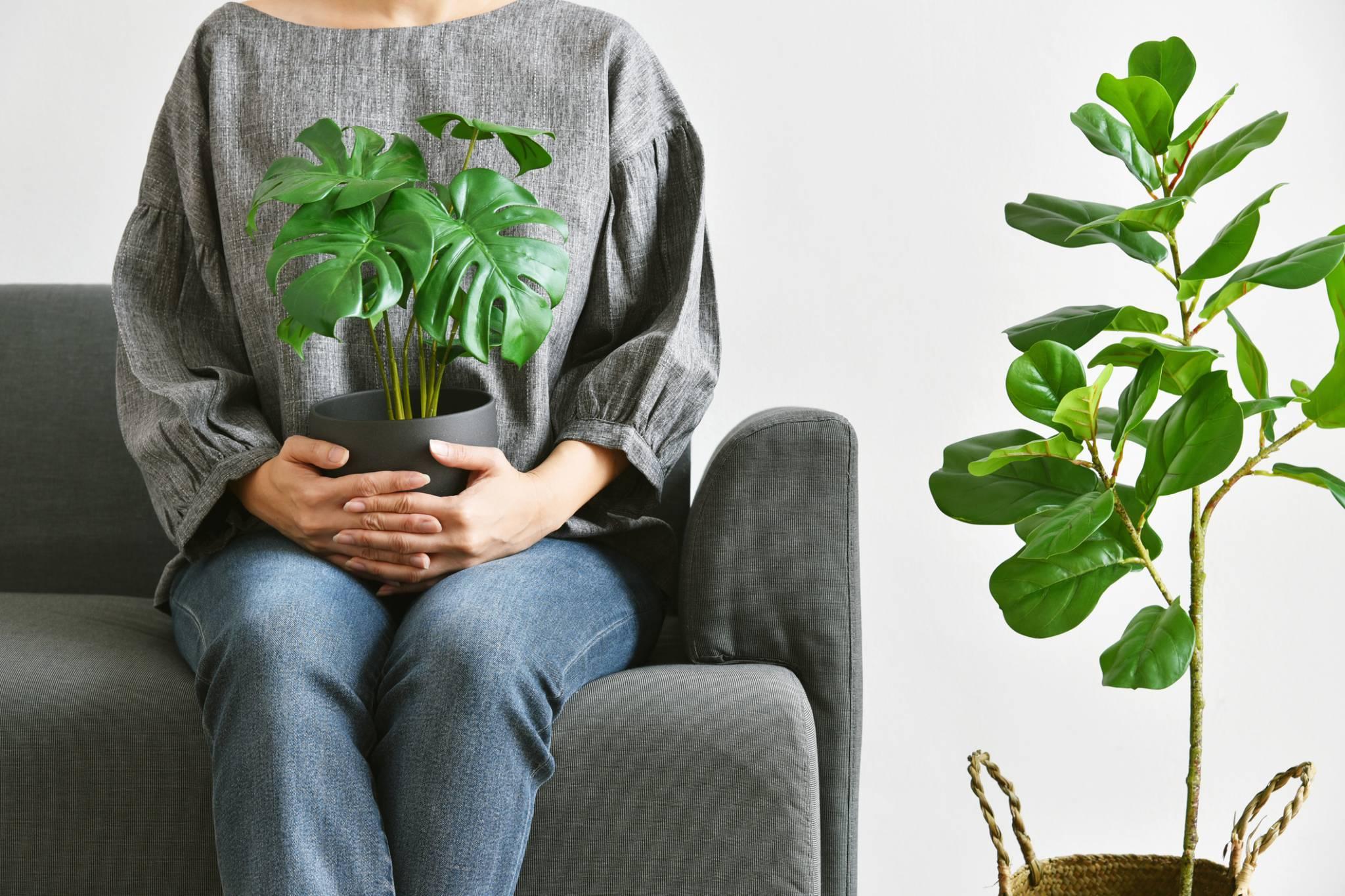 Powstała aplikacja do wymiany i adopcji roślin