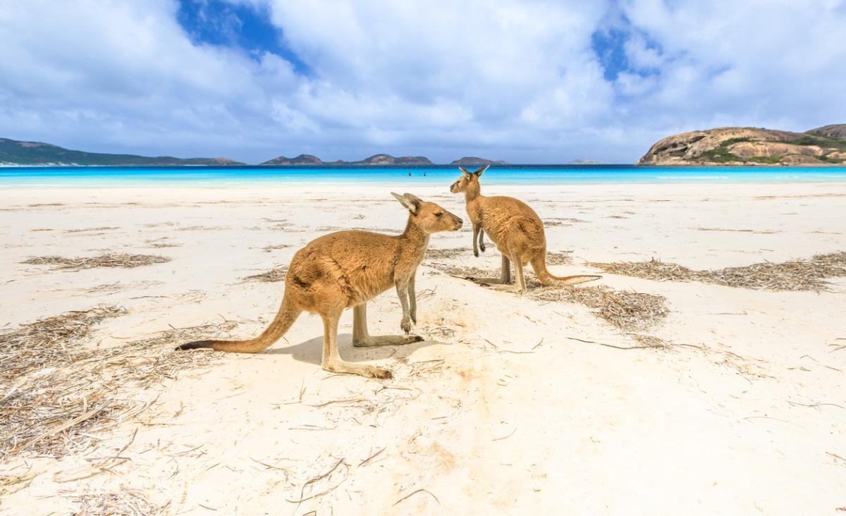 W krainie awokado, czyli Marek Niedźwiecki o Australii