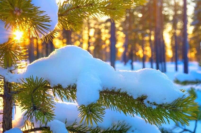 Uważne Boże Narodzenie - 5 podpowiedzi