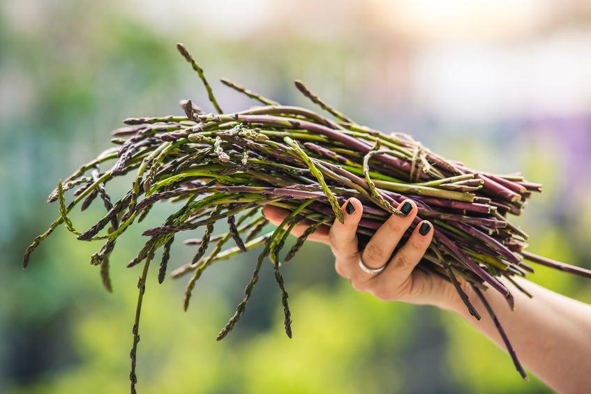 Witaminy i pierwiastki dla zdrowych włosów