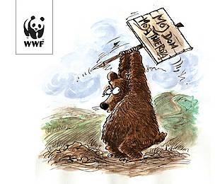 WWF chroni niedzwiedzie