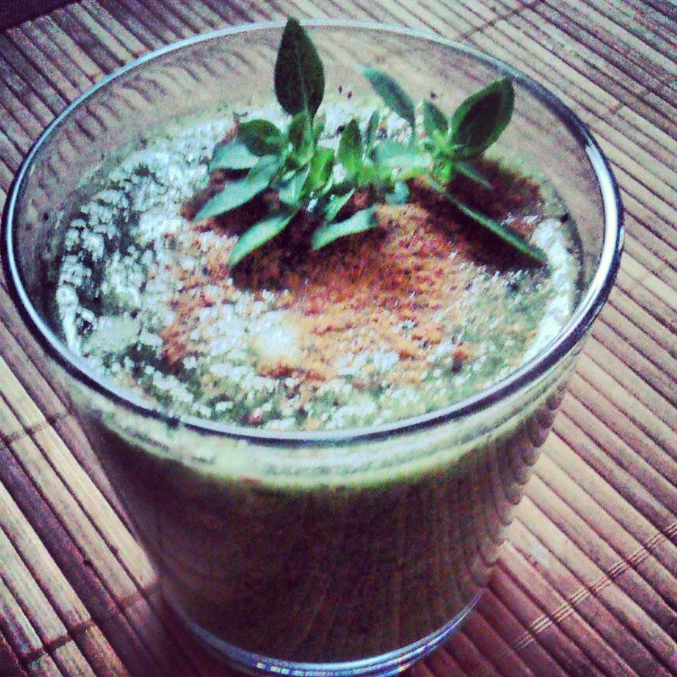 poranny zielony sok