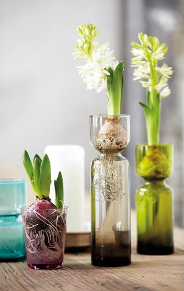 Hyacinth_vase_Celina