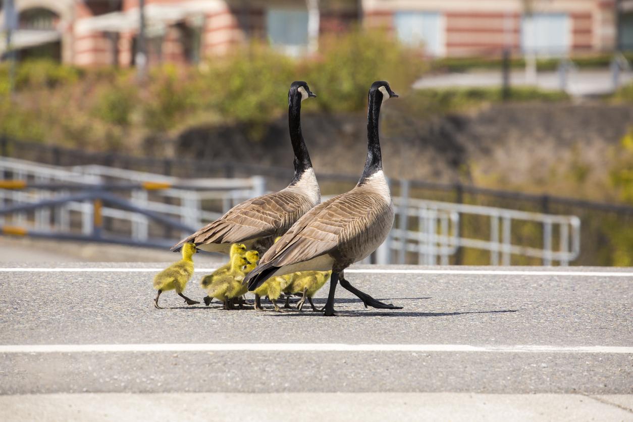 """Monogamia, zdrady, zazdrość… Jak wygląda ptasia """"miłość""""?"""