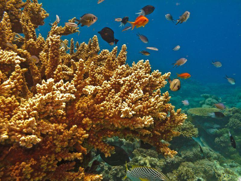 Wielka Rafa Koralowa w Google Street View