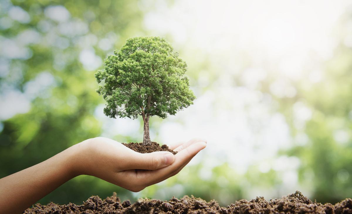 LPP stawia na zrównoważony rozwój