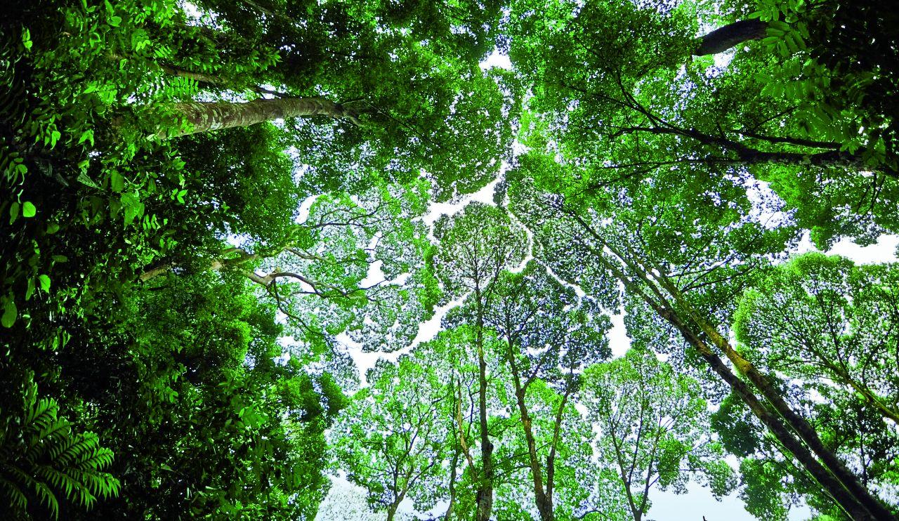 KOntakt z drzewem, dotykanie jego kory, działa na organizm człowieka relaksująco (Fot. Getty Images)