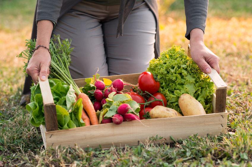 Dlaczego żywność ekologiczna jest zdrowsza?