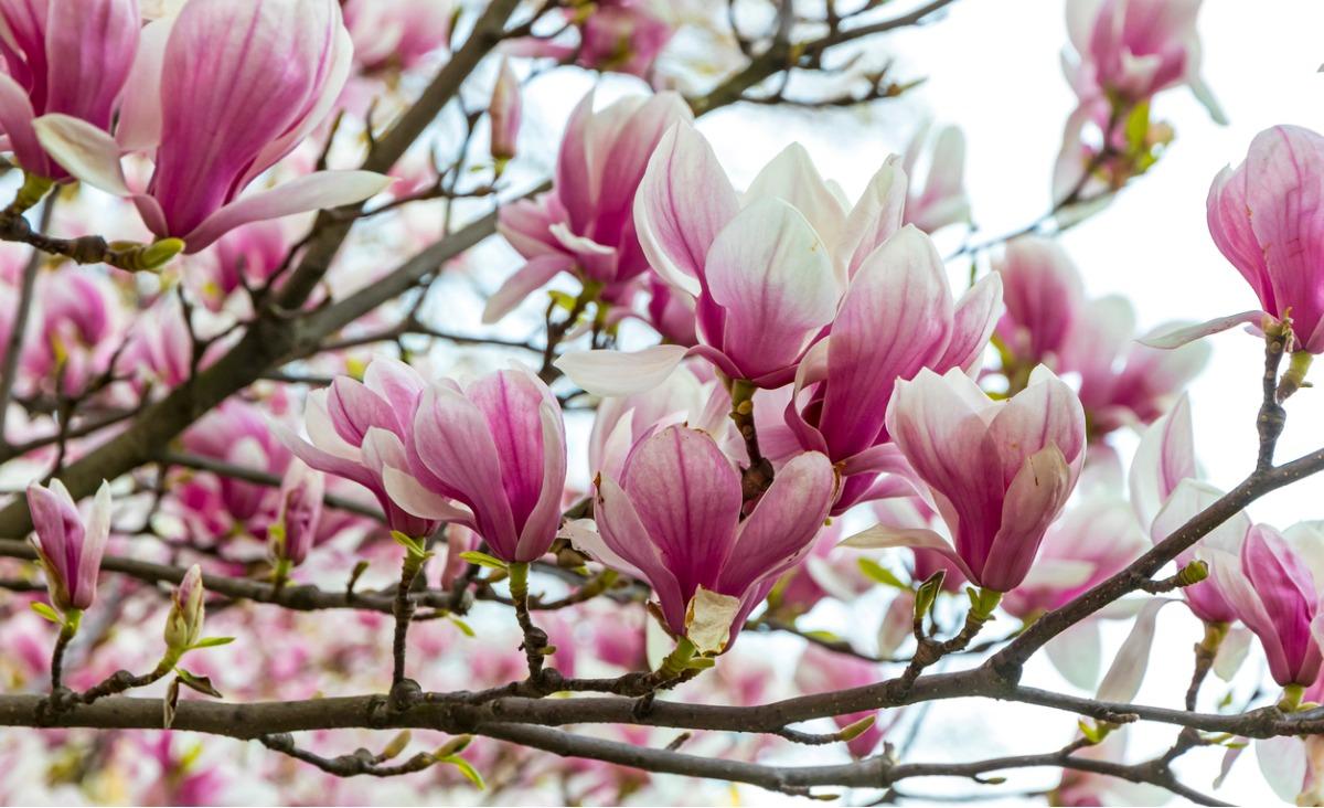 Przyroda niesie radość - najpiękniejsze zdjęcia wiosennych drzew i kwiatów