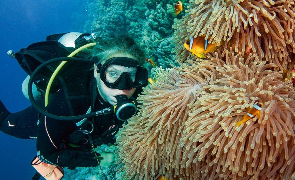 Rafy koralowe - część większej całości