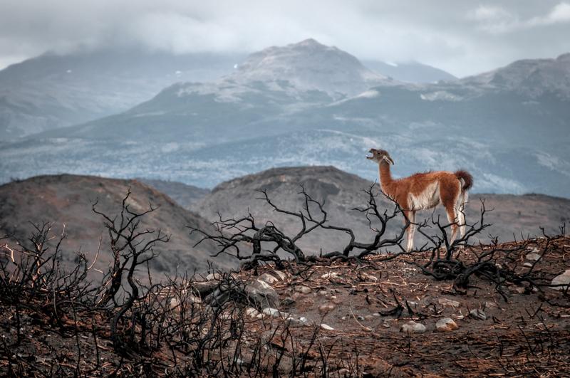 Najpiękniejsze fotografie przyrody 2020