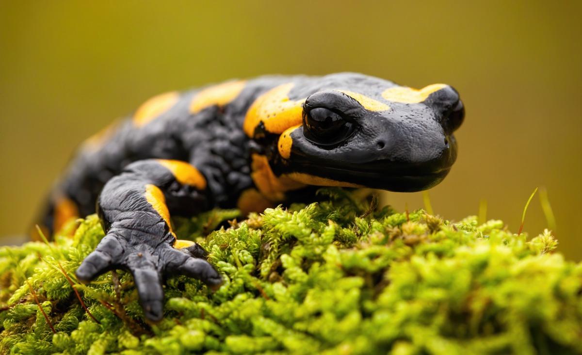 Zrób to jak salamandra. Na czym polega teoria poliwagalna?