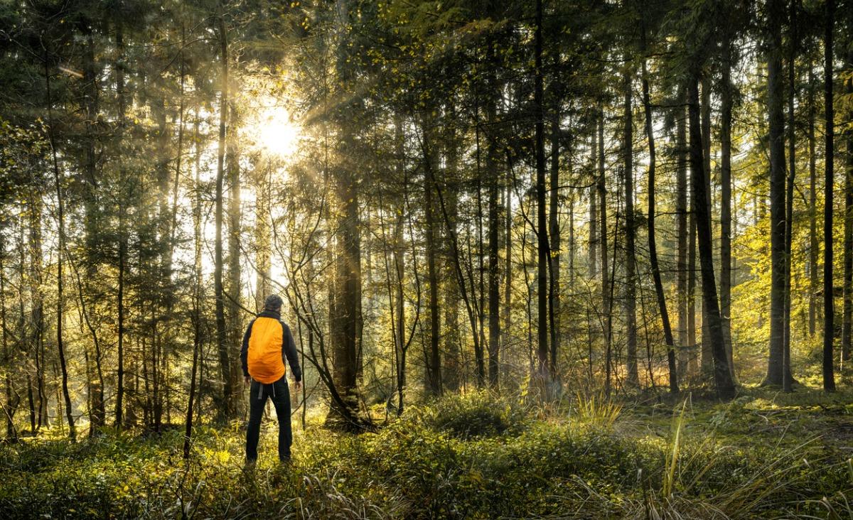 5 mitów na temat kleszczy i boreliozy