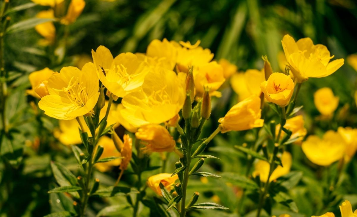 Wiosenne rośliny młodości