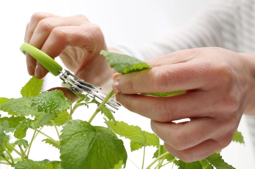 5 zdrowych roślin do domowej uprawy