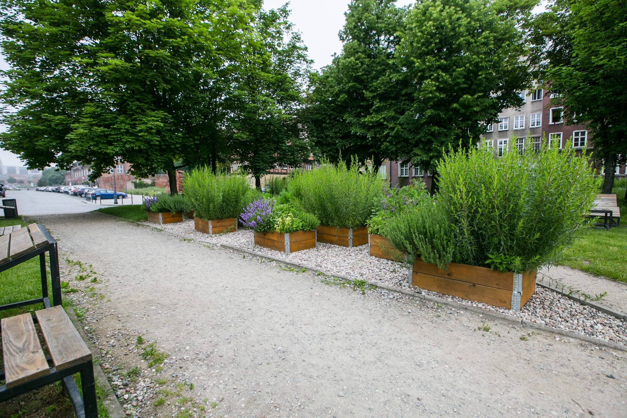 Zioła na ulicach - miejskie farmy w Gdańsku