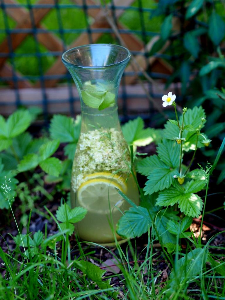 Lemoniada z kwiatami czarnego bzu