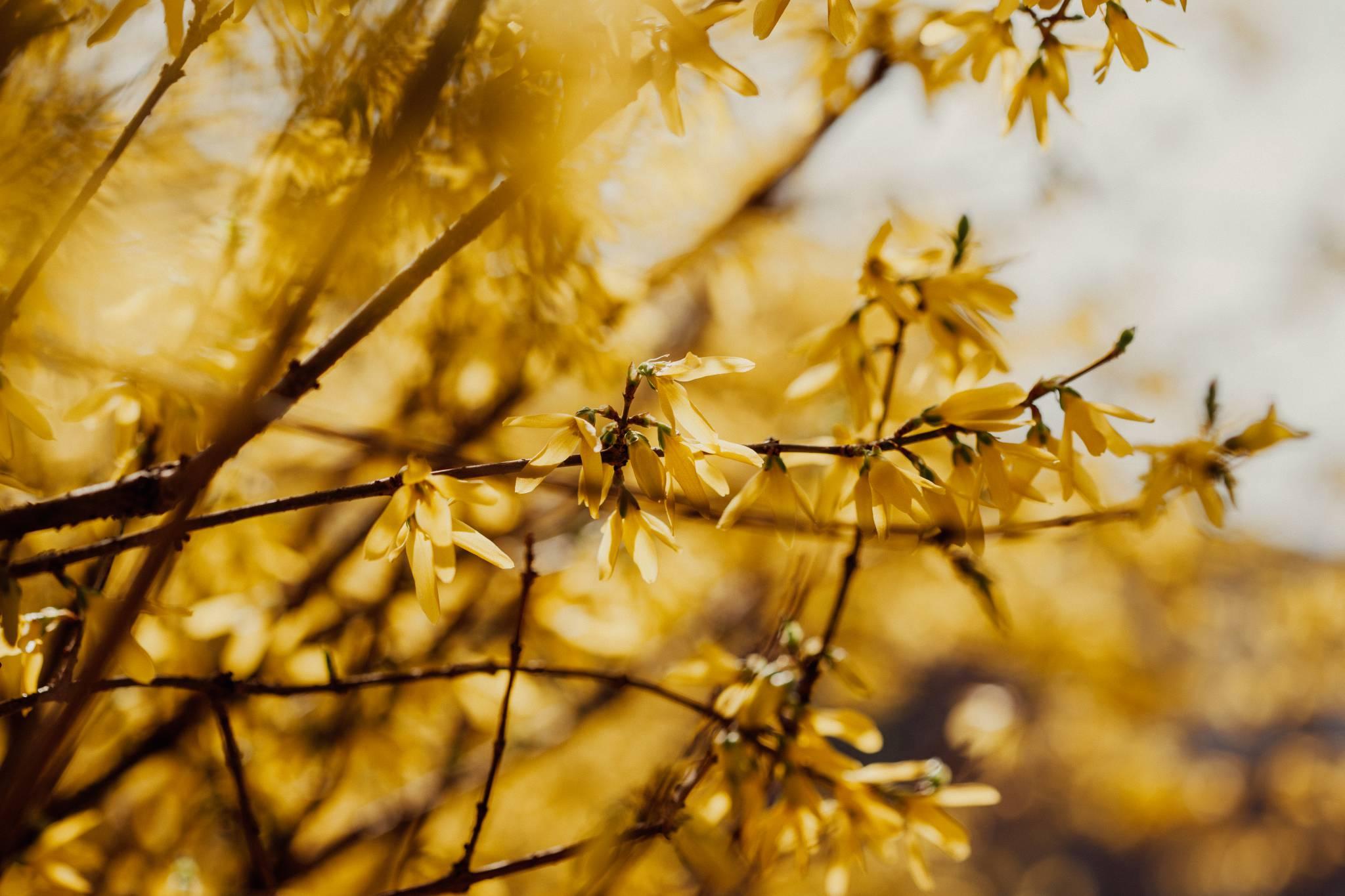 Jak przyroda budzi się do życia - wiosenne kwiaty i drzewa