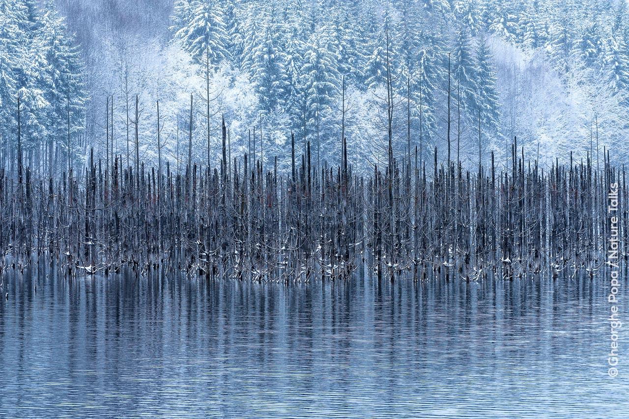 Fotografia przyrody - jak to robią mistrzowie