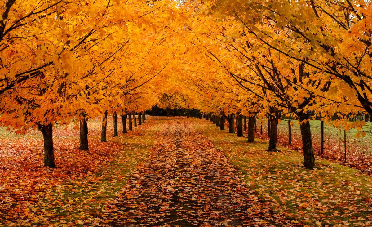 Inspiracje na listopad: Zadbaj o swoje życie wewnętrzne