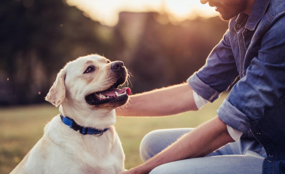 Terapia z udziałem psa. Czym jest dogoterapia?