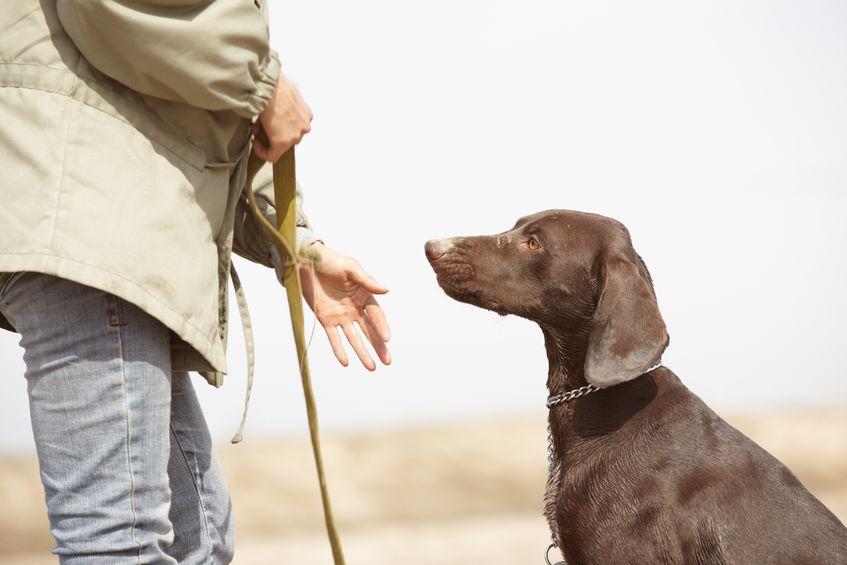 Na kłopoty - psi psycholog