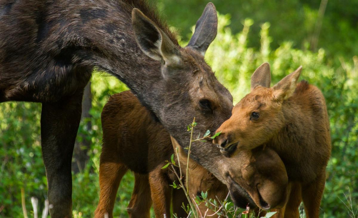 Jak zwierzęta budzą się do życia - najpiękniejsze zdjęcia