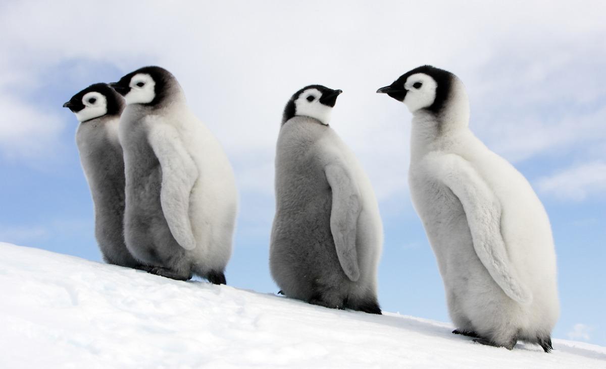 6 książek, które pomogą lepiej zrozumieć świat zwierząt