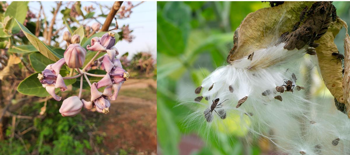 Roślinny kaszmir, skóra z grzybni – ekologiczne kierunki w przemyśle modowym