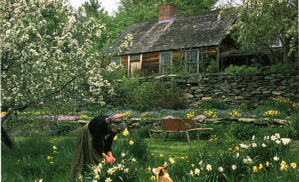 Tasha z zielonego wzgórza